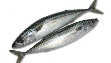 Photo of Mackerel fish lands woman in dock