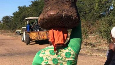Photo of Vic Falls residents scramble for elephant meat