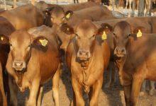 Photo of Livestock farming allocated ZWL$5, 3 billion