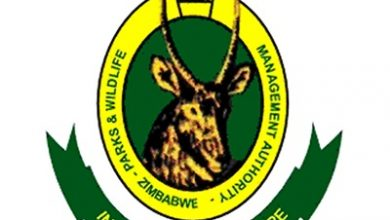 Photo of ZimParks ill-equipped to deal with poaching