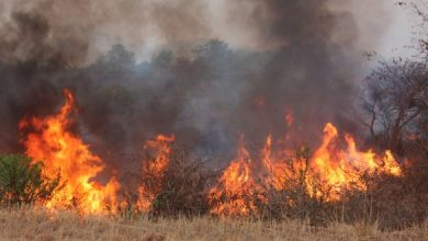 Photo of Concern over rampant veld fires in Mat North