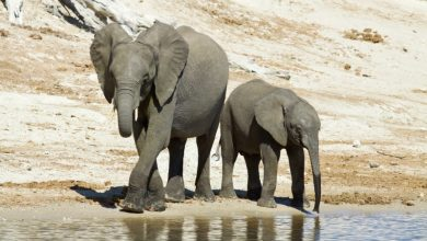 Photo of Elephant exports: ZimParks releases sales figures