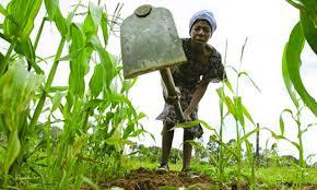 Photo of Mat North farmers blame drought on slow start to farming season