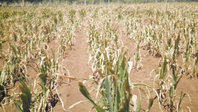 Photo of Matabeleland farmers start preparing for dry season