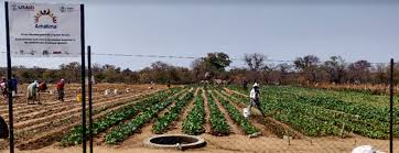 Photo of USAID launches two new food security programs in Zim