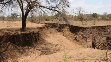 Photo of Gully erosion threatens Dete-Mabale community